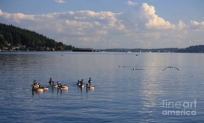 Photograph - Geese On Lake Washington by Amanda Holmes Tzafrir