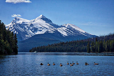 Photograph - Geese On Maligne Lake - Jasper by Stuart Litoff