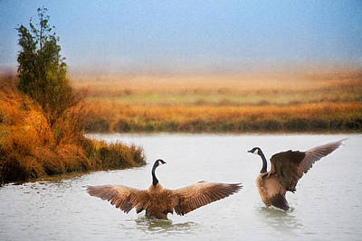 Photograph - Geese On Marsh by Bob Coates
