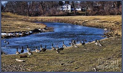 Art Print featuring the photograph Geese On The Creek by Jim Lepard