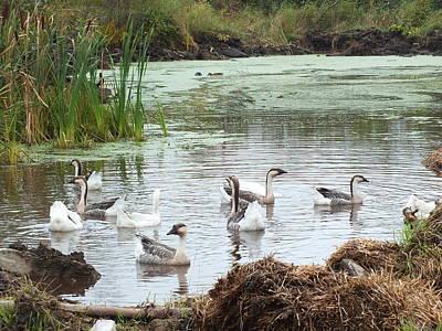 Photograph - Geese On The Farm by Gene Cyr
