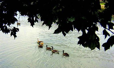 Photograph - Geese On The Lake by Paula Tohline Calhoun
