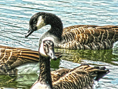 Photograph - Geese On The Pond II by Lesa Fine