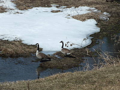 Photograph - Geese Pair 2 by Gene Cyr