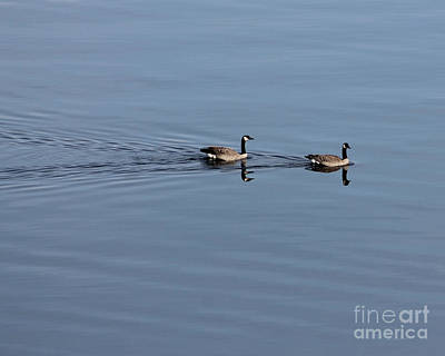 Geese Reflected Art Print
