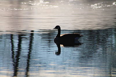 Photograph - Geese Reflection by Alicia Knust