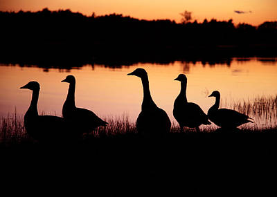 Geese Silhouette  Original by Jeff Klingler