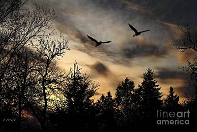 Photograph - Geese Silhouette by Marjorie Imbeau