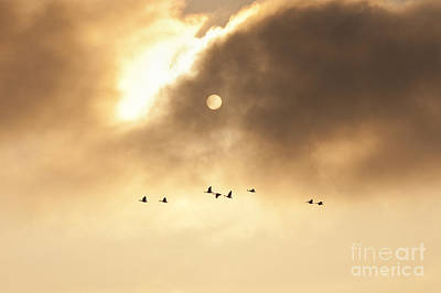 Photograph - Geese Silhouetted by Jim Corwin