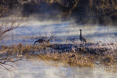 Photograph - Geese Taking A Break by Jennifer White