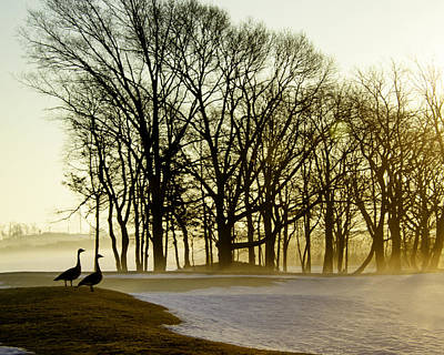 Geese Watching The Sunrise Print by Vicki Jauron
