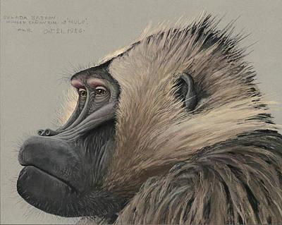 Gelada Baboon Art Print