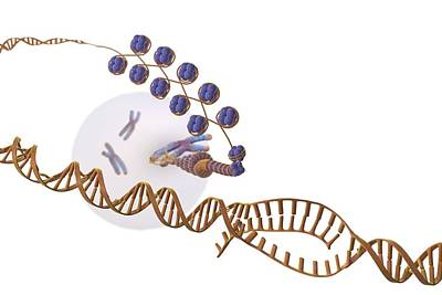 Gene Expression, Artwork Art Print by Science Photo Library