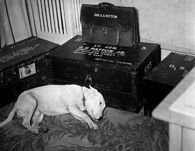 General Georg Pattons Pet Bull Terrier Art Print by Everett