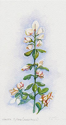 Wall Art - Painting - Genista by Elle Smith Fagan