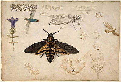 Painting - Gentian, Moth, Birds, Cats, C. 1535 by Metropolitan Museum of Art