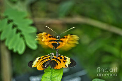 Art Print featuring the photograph Gentle Butterfly Courtship 03 by Thomas Woolworth