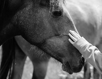 Sporthorse Photograph - Gentle by Eoin Tully