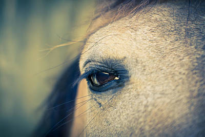 Photograph - Gentle Eye by Priya Ghose