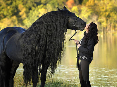 Photograph - Gentle Giant Frederik The Great by Pinnacle Friesians