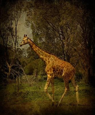 Gentle Giant Original by Shari Mattox