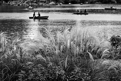 Photograph - Gentle Grasses Along The Lake by Cornelis Verwaal