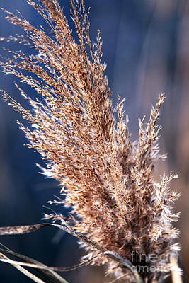 Pine Barrens Photograph - Gentle Nature by John Rizzuto