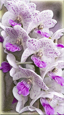 Photograph - Gentle Persuasion Orchid by Roy Foos