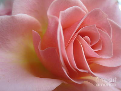 Gentle Pink Rose Art Print
