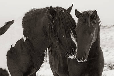 Washakie Photograph - Gentle Touch by Sandy Sisti