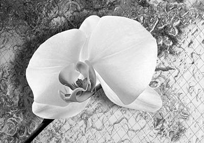 Gentle White Orchid Art Print by Ron Regalado