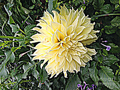 Photograph - Gentleness In The Garden by Luther Fine Art