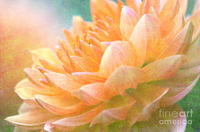 Gently Textured Dahlia  Art Print