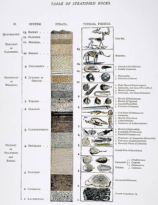 Triassic Photograph - Geology Table: Prehistory by Granger