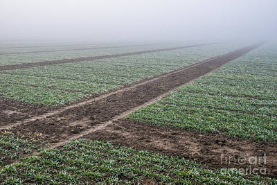Geometry In Agriculture Print by Hannes Cmarits