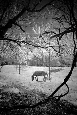 Photograph - Georgia Horses by Bradley R Youngberg