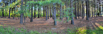 Photograph - Georgia Pine Forest by Gordon Elwell