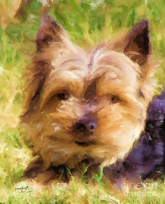 Digital Art - Georgie Yorkie by Ruby Cross