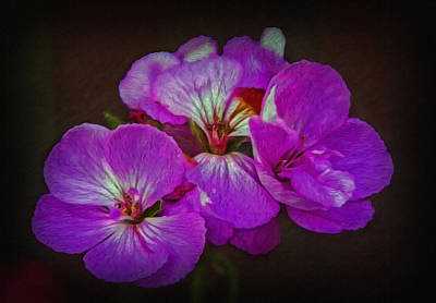 Print featuring the photograph Geranium Blossom by Hanny Heim