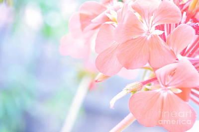 Photograph - Geranium Pink by Ioanna Papanikolaou