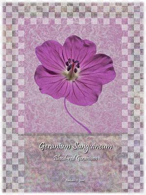 Digital Art - Geranium Purple Poster 3 by Barbara St Jean
