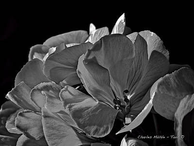Mixed Media - Geraniums Xx In B/w by Charles Muhle