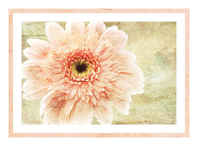 Photograph - Gerber Daisy 1 by Andee Design