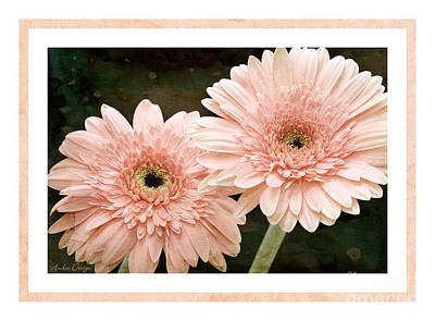 Photograph - Gerber Daisy 5 by Andee Design