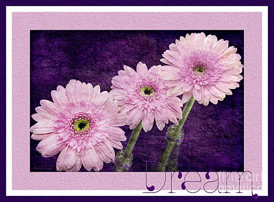Photograph - Gerber Daisy Dream 7 by Andee Design