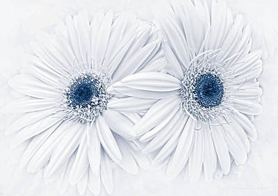 Gerbera Daisy Photograph - Gerber Daisy Flowers In Blue by Jennie Marie Schell