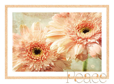Andee Design White Photograph - Gerber Daisy Peace 2 by Andee Design