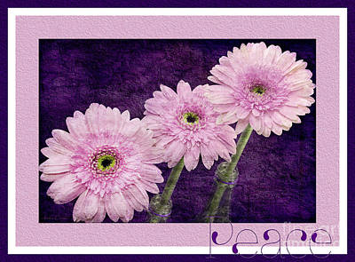 Photograph - Gerber Daisy Peace 7 by Andee Design