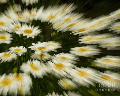 Photograph - Gerbera Blur by Dale Nelson