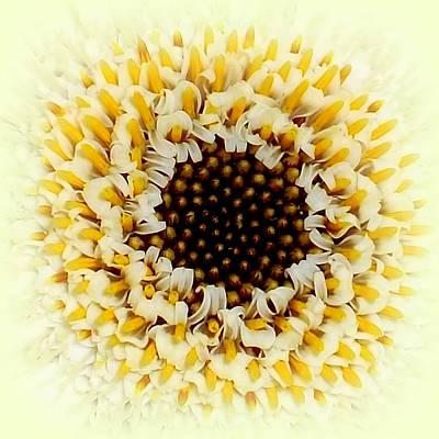 The Creative Minds Photograph - Gerbera Closeup by The Creative Minds Art and Photography